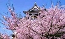 木森电气推荐武汉大学旅游